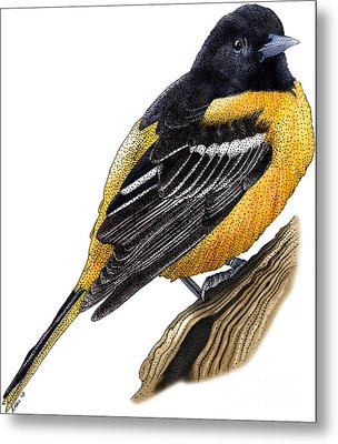 Baltimore Oriole Metal Print by Roger Hall and Photo Researchers
