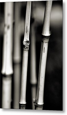 Metal Print featuring the photograph Bamboo by Bob Wall