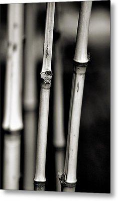 Bamboo Metal Print by Bob Wall