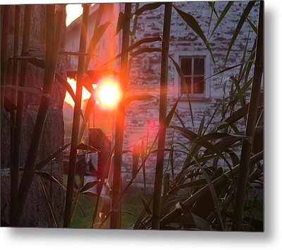 Metal Print featuring the photograph Bamboo Sunrise by Tina M Wenger