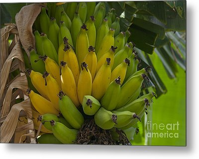 Banana Metal Print by Sharon Mau