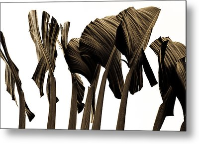 Banana Tree Leafs Metal Print