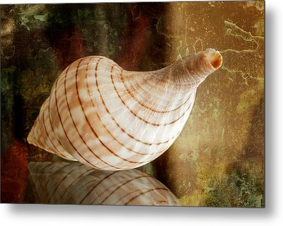 Banded Tulip Seashell Metal Print by Bonnie Barry