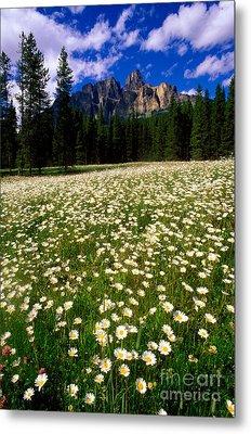 Banff - Castle Mountain Daisies Metal Print by Terry Elniski