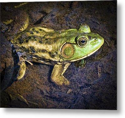 Barataria Swamp Frog Metal Print by Ray Devlin