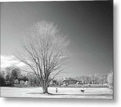Bare Frozen Tree In Winter Metal Print by Yaplan