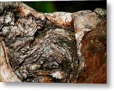 Bark Metal Print by Christopher Gaston
