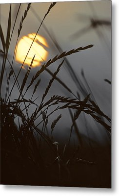 Barley Sunrise Metal Print by Nigel Forster