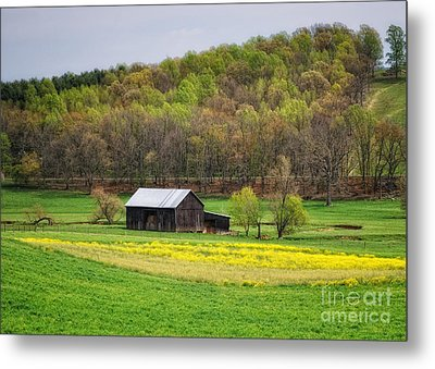 Barn In The Hollar Metal Print by Pamela Baker