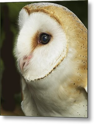 Barn Owl Close-up Metal Print by Barbara Middleton