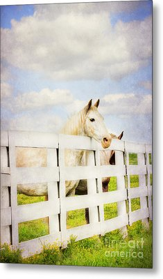 Barn Yard Dreamer Metal Print by Darren Fisher