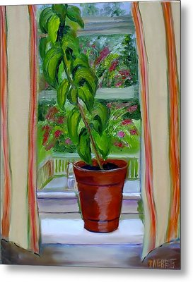 Basil In My Window Metal Print by Phebe Smith