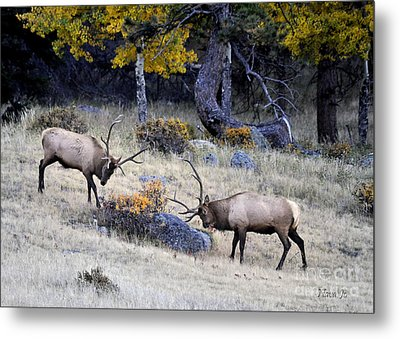 Metal Print featuring the photograph Battlefield Colorado by Nava Thompson