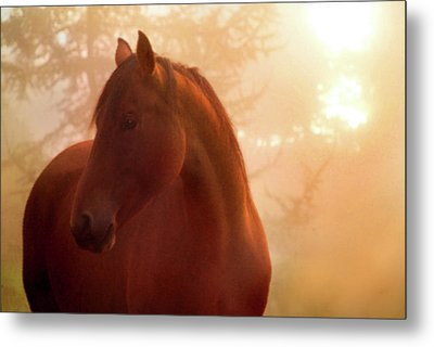 Bay Horse In Fog At Sunrise Metal Print by Anne Louise MacDonald of Hug a Horse Farm