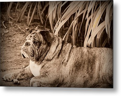 Metal Print featuring the photograph Baydie by Jeanette C Landstrom