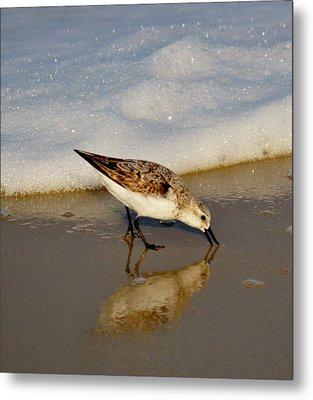 Beach Bird Metal Print by William Bartholomew