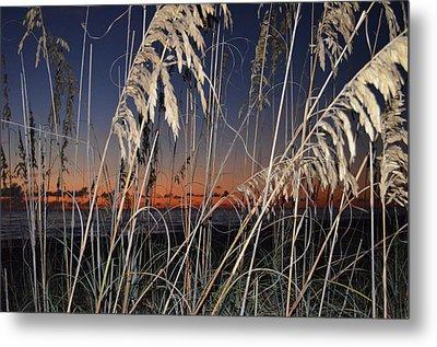 Beach Grass Metal Print by Susan McNamara