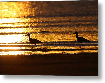 Beach Stone-curlews At Sunset Metal Print by Bruce J Robinson