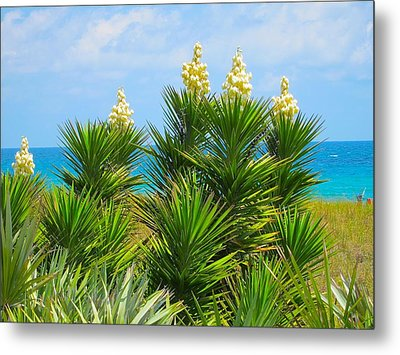 Beach Yucca In Blossom Metal Print by Kathryn Barry