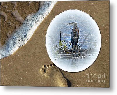 Beached Heron Metal Print by Sue Stefanowicz