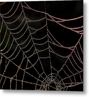 Metal Print featuring the photograph Beaded Beauty by Karen Harrison
