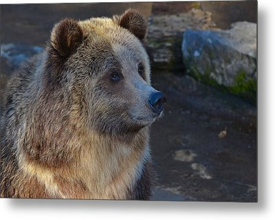 Bear Joy Metal Print