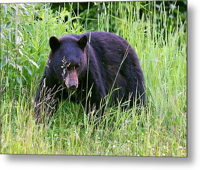 Metal Print featuring the photograph Bear On The Hillside by Myrna Bradshaw