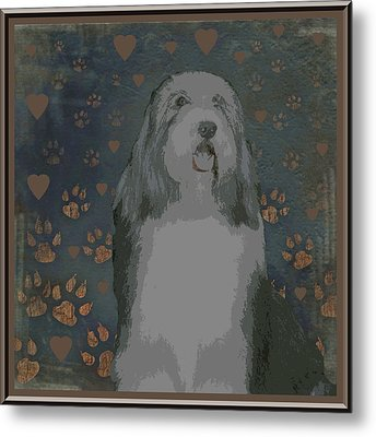 Bearded Collie Metal Print by One Rude Dawg Orcutt