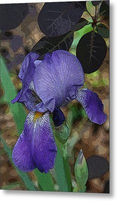 Metal Print featuring the photograph Bearded Iris by Michael Friedman
