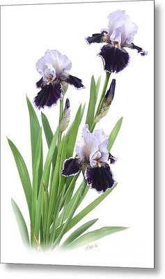Bearded Iris Trio Metal Print by Artellus Artworks