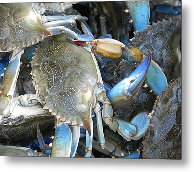Beaufort Blue Crabs Metal Print by Patricia Greer