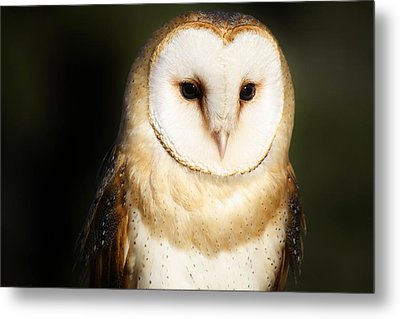Beautiful Barn Owl Metal Print by Paulette Thomas