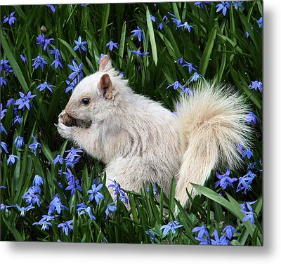 Beautiful Blue Eyes Metal Print