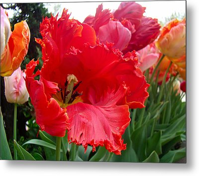 Beautiful From Inside And Out - Parrot Tulips In Philadelphia Metal Print