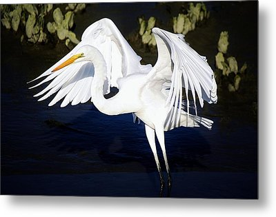 Beautiful Great White Egret Metal Print by Paulette Thomas