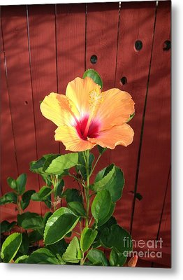 Beautiful Hibiscus Metal Print by Mike Ivey