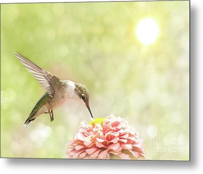 Beautiful Hummingbird Metal Print