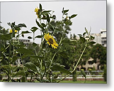 Beautiful Yellow Flower In A Garden Metal Print by Ashish Agarwal