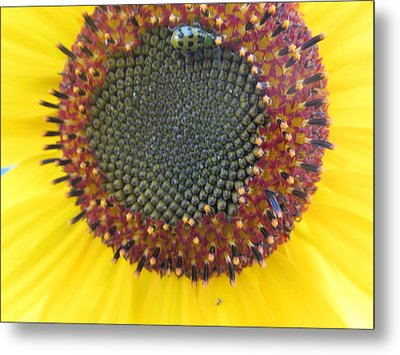 Metal Print featuring the photograph Beauty And The Ladybug by Tina M Wenger