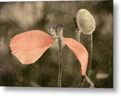 Beauty Fades Metal Print by Bill Pevlor