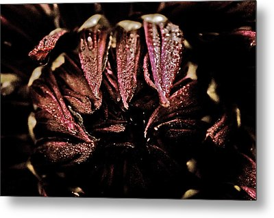 Beauty In Dark Metal Print by Terrie Taylor