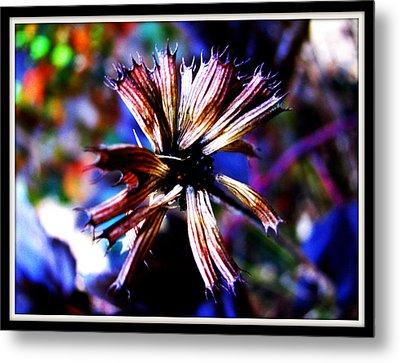 Beauty In Leftovers Metal Print by Janet Backhaus