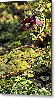 Beauty In Question Metal Print