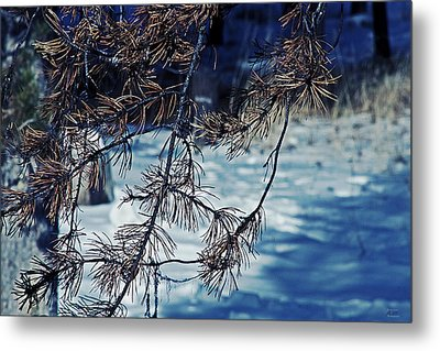 Metal Print featuring the photograph Beauty Of Simplicity by Janie Johnson
