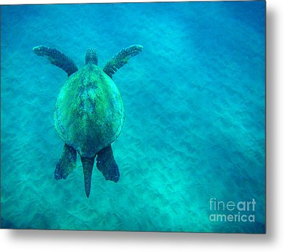 Beauty Of The Sea Metal Print by Bob Christopher