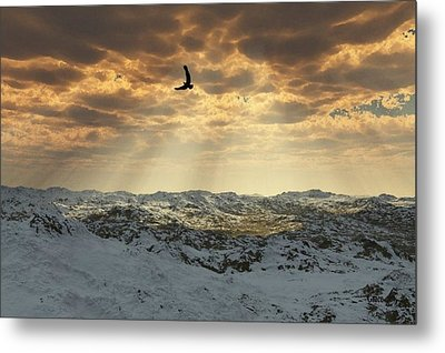 Beauty Of Winter Metal Print by Julie Grace