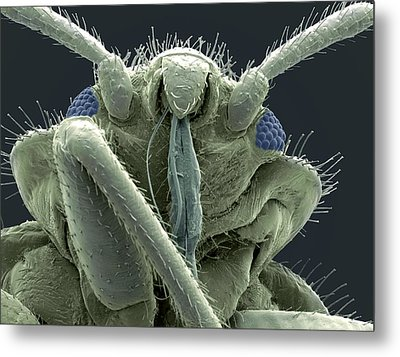 Bedbug Head, Sem Metal Print