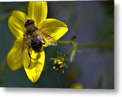 Bee At Rest Metal Print