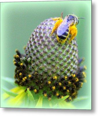 Bee Covered In Pollen Metal Print by Maureen  McDonald