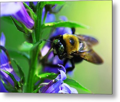 Bee Delight Metal Print